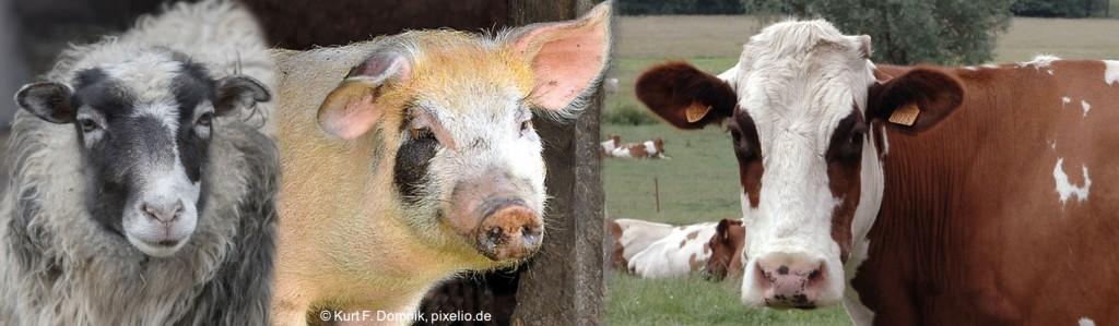 Header-Nutztiere